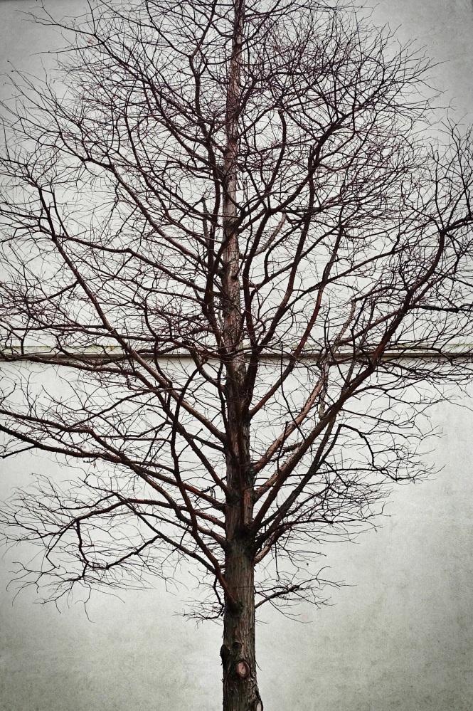 Day 43. Tree